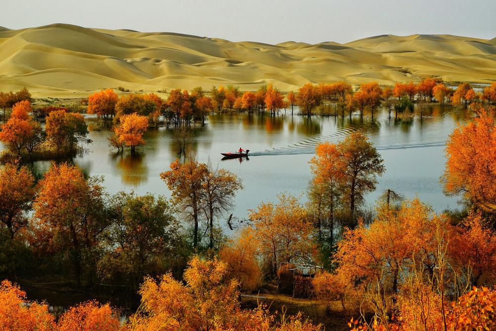 4 3 место – Деревья в песчаном море. Автор фото: Chuansheng Wang. Место: провинция Синьцзян.