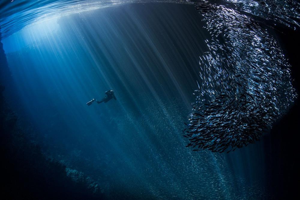 22 Обитатели пещер Автор фото: Scott Portelli.