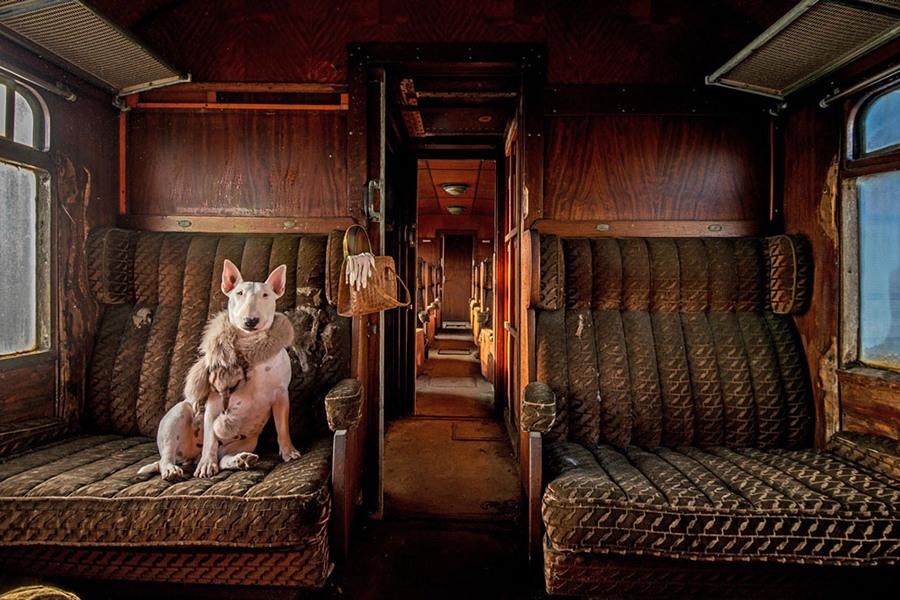 2 Фотограф Элис ван Кэмпен  открывает заброшенные места Европы со своим другом бультерьером Крэр...