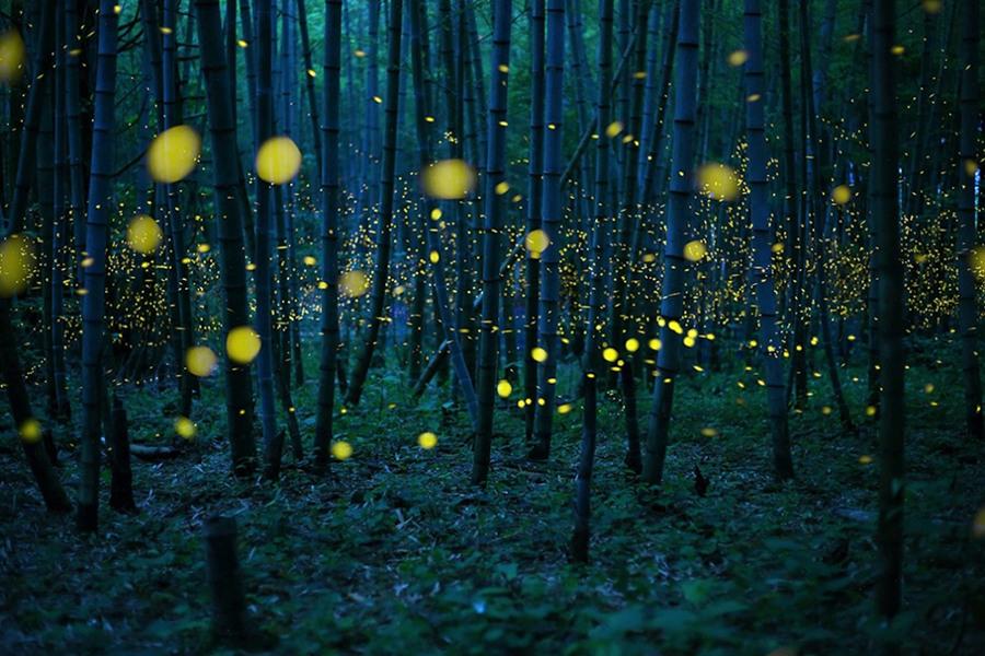 9 За работу «Волшебный бамбуковый лес» фотограф Кей Номияма  из Японии получил звание «Фотограф года» в Открытом разделе крупнейшего фотоконкурса Sony World Photography Awards.