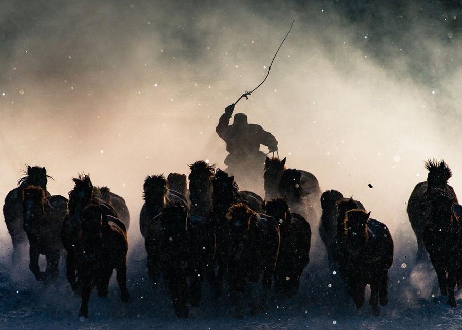 10 Гран-при конкурса в этом году завоевал китайский фотограф-любитель Энтони Лау (Anthony Lau) Кадр «Зимний всадник», по признанию автора, был запечатлен ранним утром в холодную погоду, и фотографу было непросто уговорить себя выйти из автомобиля.