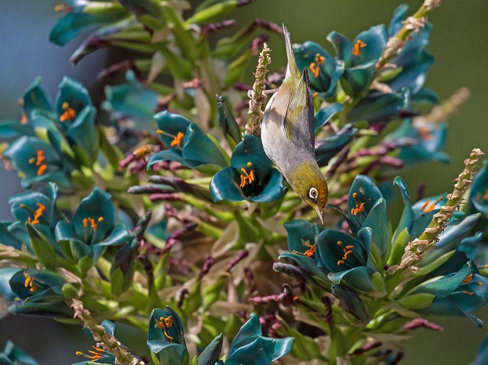"""1 """"Просто непреодолимый"""". Автор - Chew Yen Fook. Снимок сделан в Ботаническом саду города Крайстчерч (Новая Зеландия)."""