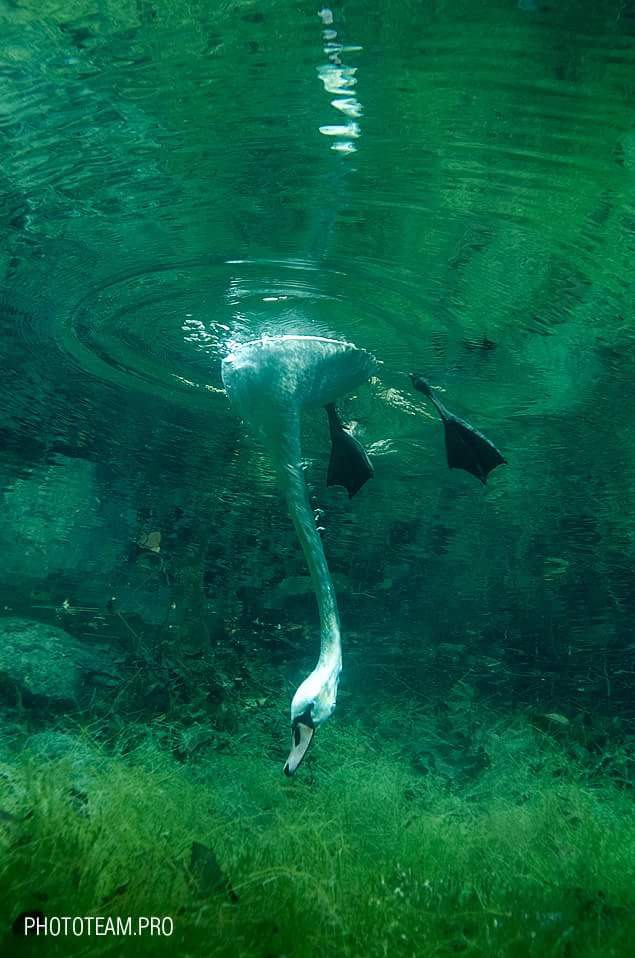 Мастер подводной фотографии