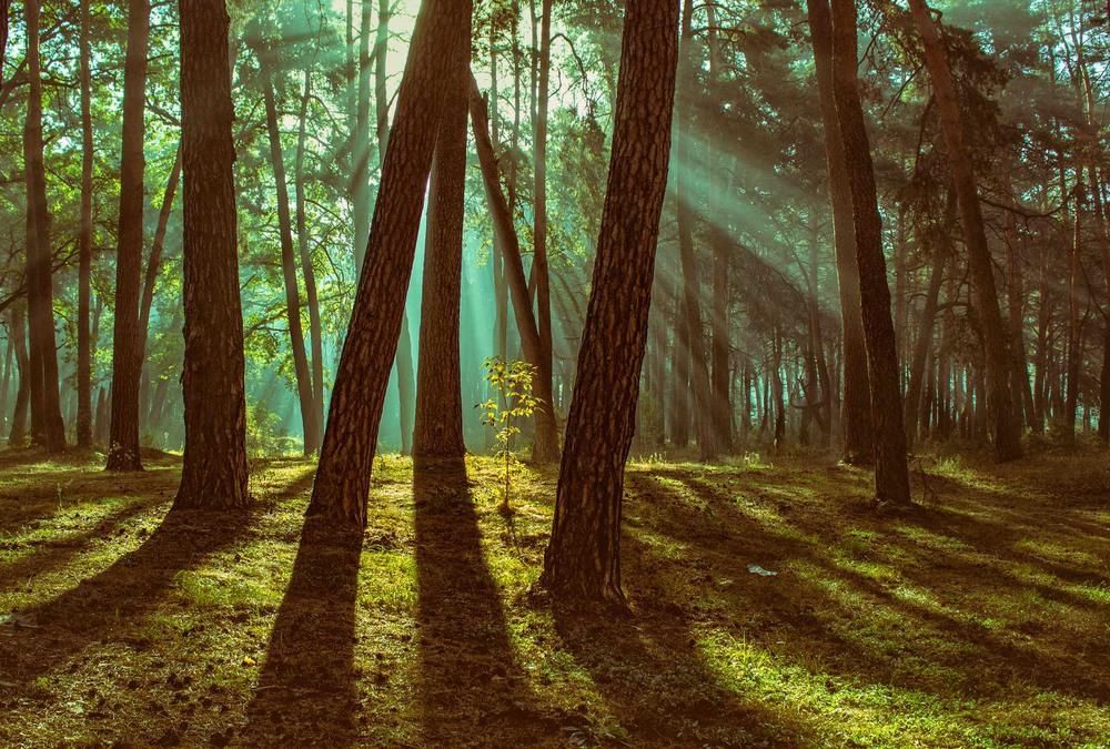 Ліс в тумані, що спливає Автор: Александр Кондратюк/Сандродед