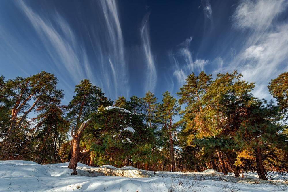 Художник-зима малює картини Автор: Ігор Солодовніков