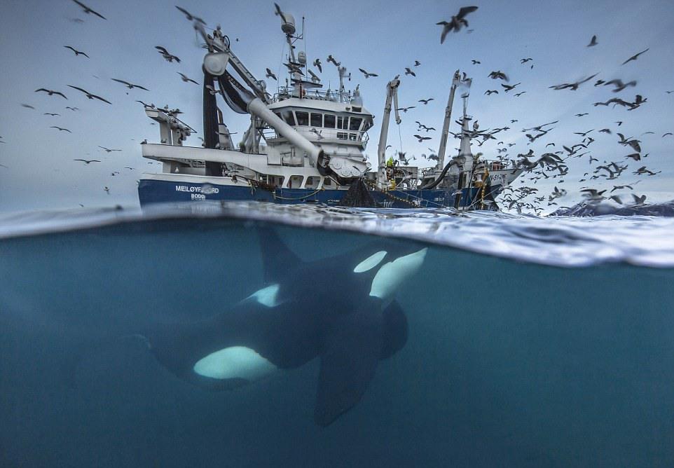 """1 """"Раздел улова"""". Автор - Одун Рикардсен (Норвегия)."""