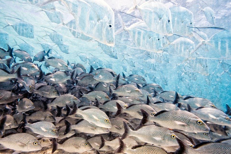 """8 """"Исчезающие рыбы"""". Автор - Яго Леонардо (Испания)."""