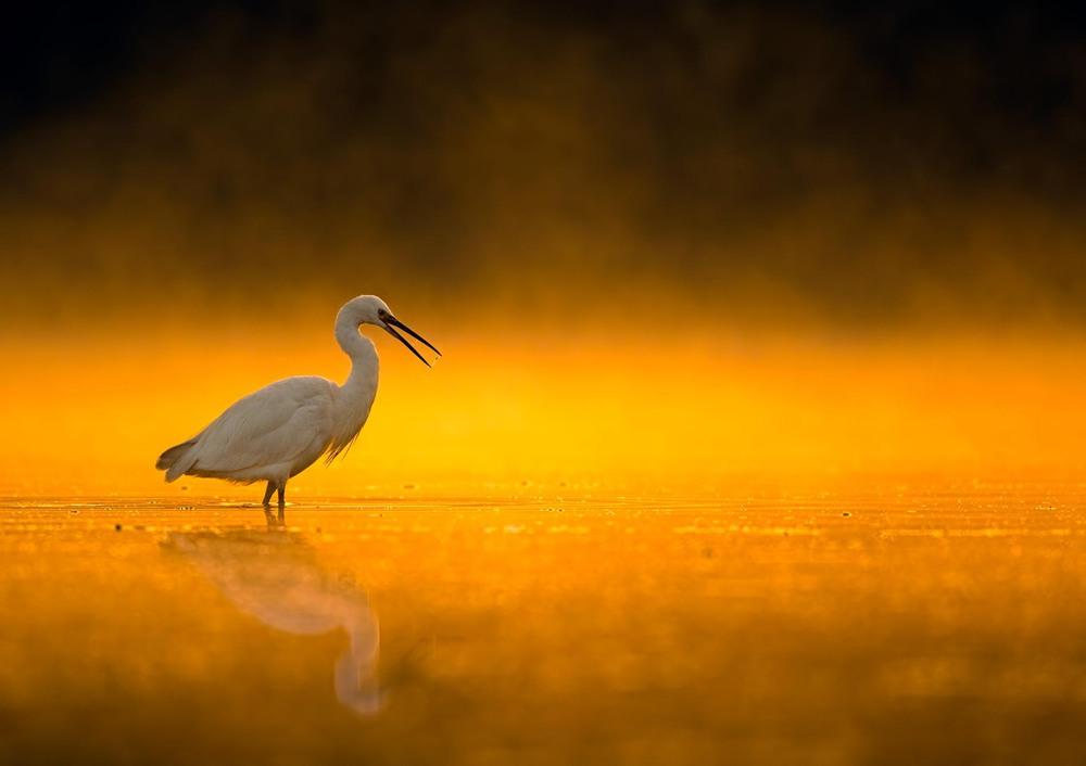 3 Ранняя пташка. Автор - TAHIR ABBAS AWAN.