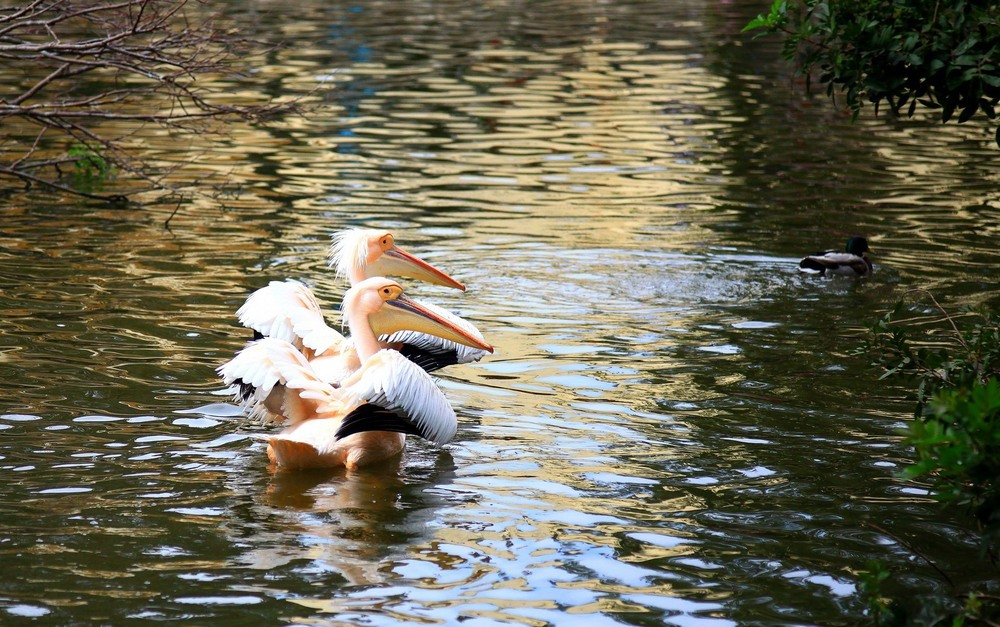 Синхронное плавание. Автор: Ольга.