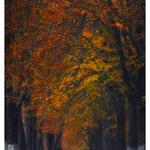 "1 «Autumn ""Dojo""». Автор - DzjuSan."