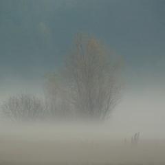 Крехаївські тумани