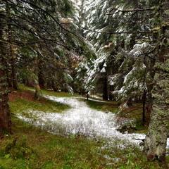 Вересневий сніг у Горганах 2
