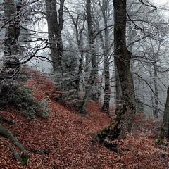 Мармуровий ліс