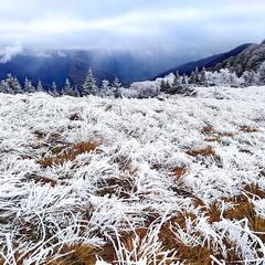 Зимове мереживо