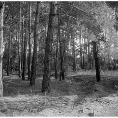 Ольшаницький ліс