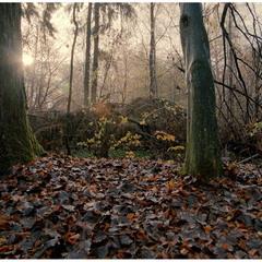 Золота осінь у Великому Любіні