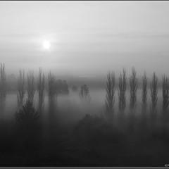 Якось туманним ранком...