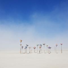 пустыни пыльные цветы
