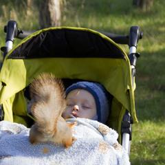 Не спать, сначала орехи!