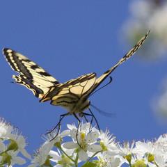 Прогулка бабочки!