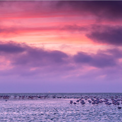 Розовые фламинго на закате
