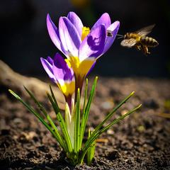 Пчелиный аэродром