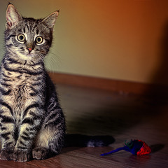 Портрет рядового кота