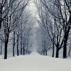 В стані зимового спокою.