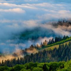 Лесные туманы