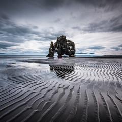 Дивовижна ісландська істота п'є воду на чорному пляжі