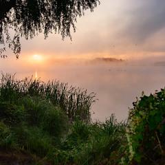 Туман и лебеди 2
