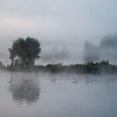 Туман и лебеди