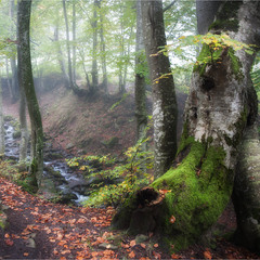 В карпатском лесу