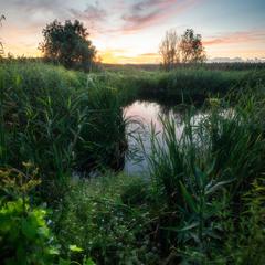 Вечер на болоте
