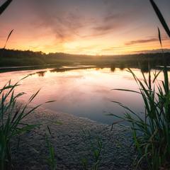 И на болоте бывает красота