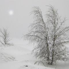 странники снежной пустыни