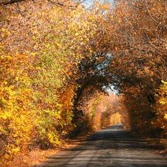 коридоры осени