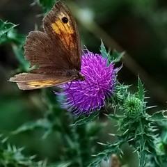 Цветочки бабочки
