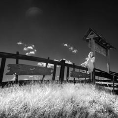 И уносит меня в никуда На родном деревянном заборе...