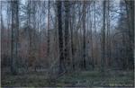 Поліський ранок