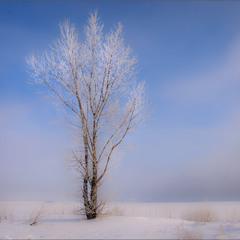 Про одиноке деревце в морозну пору...