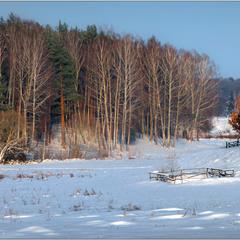 Лось у лісі