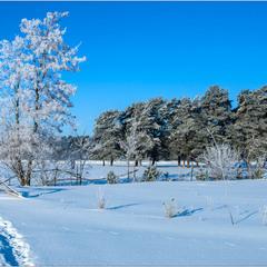 Наша Зима...