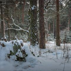 У лісі, ой у темному...
