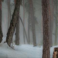 Туман хмільний зимовим лісом бродить...