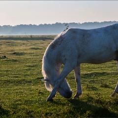 Поліський ранок починається з роси...