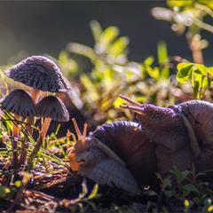 На лісовій галявині кохалися два равлики...
