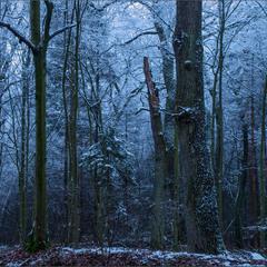 Початок зими у Решуцькому лісі...