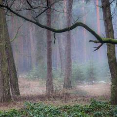 Деревце маленьке, гілочка довгенька!