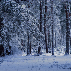 А вчора була Зима!